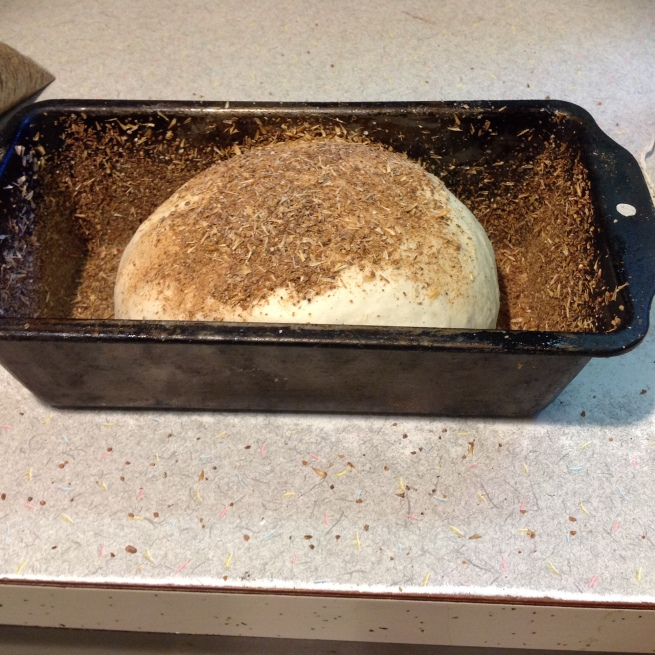 Pan one of the dough balls for bread, using spent grains for topping and lining the bread pan