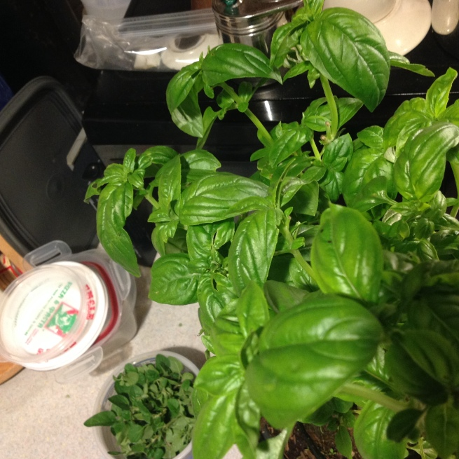 pick some fresh herbs like basil and oregano