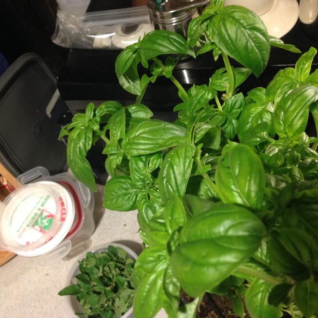 pick some fresh herbs like basil and oregano